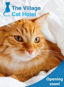 Village cat hotel